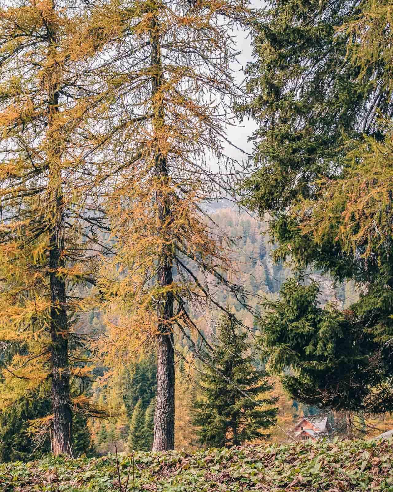 visit trentino woods