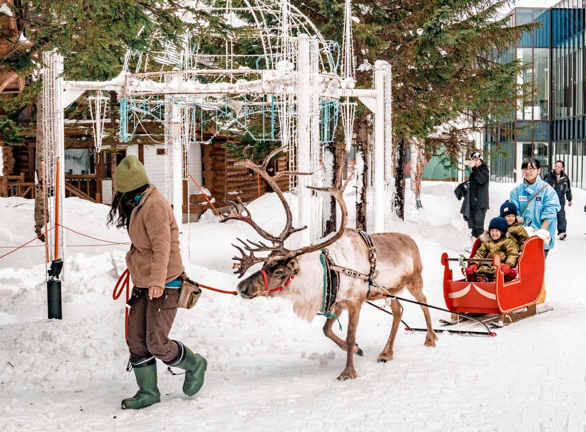 rusutsu resort reindeer